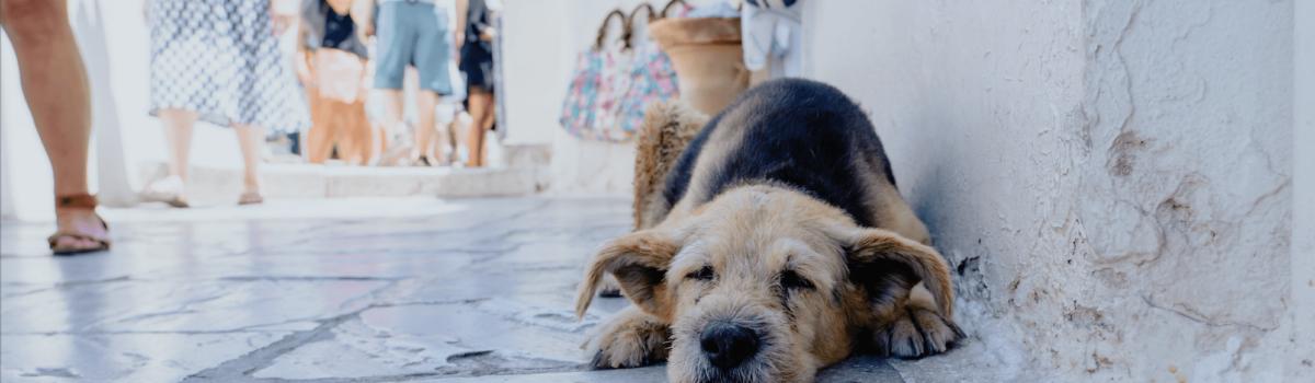 5 consejos para que tu mascota disfrute del Verano